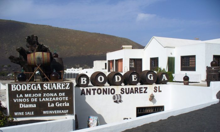 Lanzarote has a number of small vineyards on the central road from Yaiza to San Bartolomé. A handful of wine-selling bodegas dot the road. (Wibke Carter)