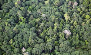 Indonesia to Verify Forest Ownership Issues