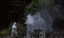 Southern China Struggles to Control Dengue Fever, Record Number of Cases Reported