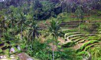 Finding Bliss in Ubud
