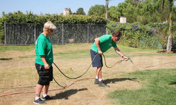 Lawn Paint Pros paints the lawn of a Camarillo, Calif. resident on Sept. 12. Lawn painting has taken off as a way to save on water while still having a lush-looking, green lawn. (Sarah Le/Epoch Times)