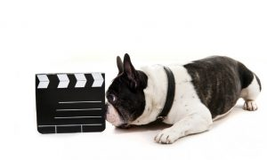 How the Films You've Seen Influence Your Choice of Dog