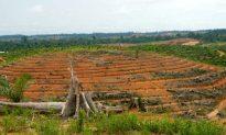 Illegal Plantation Still Run by Palm Oil Company