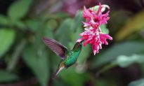 Most Birds Can't Taste Sugar – Here's Why the Hummingbird Can