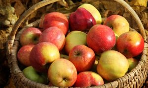 Enjoy the Fall Apple Harvest