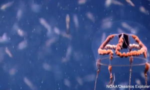 Rare Bizarre-Looking Creature Spotted by Underwater Researchers (Video)