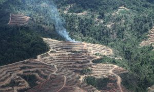 Donuts Companies Cutting Palm Oil from Deforestation