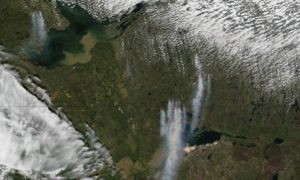 Canadian Forests Require Wildfires for Biodiversity