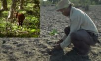 'Forest Man'—The Man Who Planted a Forest in India