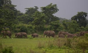 Birth Control to Solve Human-Elephant Conflicts