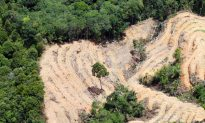 Cargill Stops Deforestation for Entire Global Chain