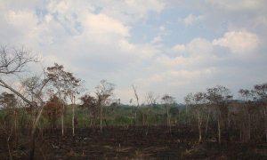 40 Countries in UN Summit to Fight Deforestation