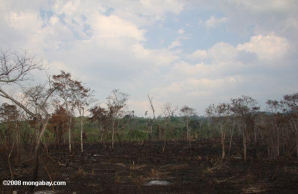 Burned savanna in Guatemala. The country committed to restoring 1.2 million hectares. (Rhett A. Butler)