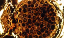 Newly Found Fossils Could Be Among Earth's Earliest (Video)