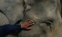 5 Ways to Stop the World's Wildlife Vanishing