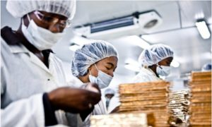 Small Chocolate Company Working For Conservation