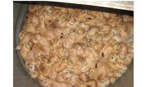 Exotic Animal Trade Has Serious Problems (photos)