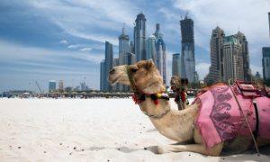 Dubai's Top 5 Desert Distractions