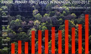 Despite Deforestation, Indonesia is Making Progress