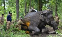 India Forest Rangers Need Protections Too