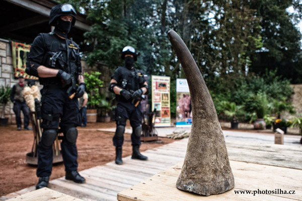 Armed customs guards stand behind a rhino horn waiting to be burnt. Photo courtesy of CITES Secretariat.