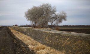 Soaring Almond Prices, Drought, and the Future of Food