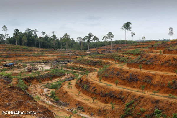 Rainforest clearing for oil palm in Aceh Province, Sumatra. Photo by Rhett A. Butler