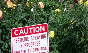 Mental Health Awareness Week: Pesticide Use by Farmers Linked to High Rates of Depression, Suicides