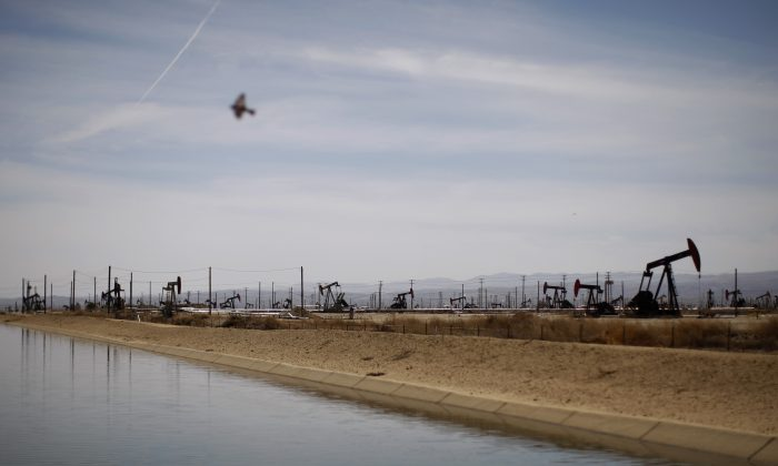 A swallows flies over a canal near Lost Hills, Calif., on March 23, 2014. (David McNew/Getty Images)