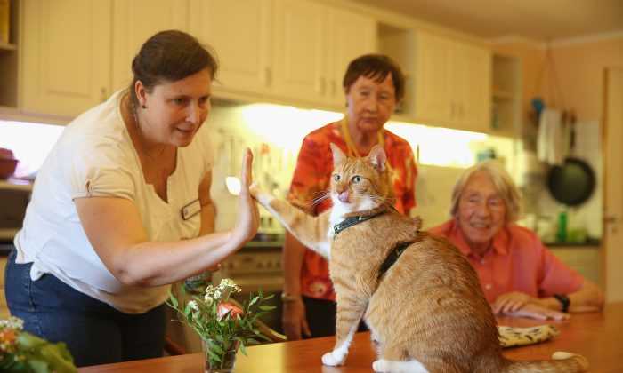 Seniors suffering from dementia takes caer of cat, at  senior care facility. (Sean Gallup/Getty Images)