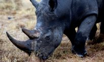 INTERPOL Launches African Environmental Crime Unit