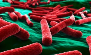 The Second Brain: Gut Bacteria Control Human Behavior to Get the Best Nutrients