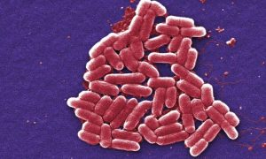 The Fascinating Bacteria in Your Gut, and How It Affects Our Whole Lives