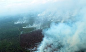 Indonesia Palm Oil Company Appeals to Supreme Court