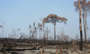 Small Farmers Play Big Role in Deforestation