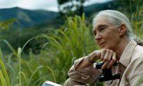 Jane Goodall Joins Mongabay for Conservation
