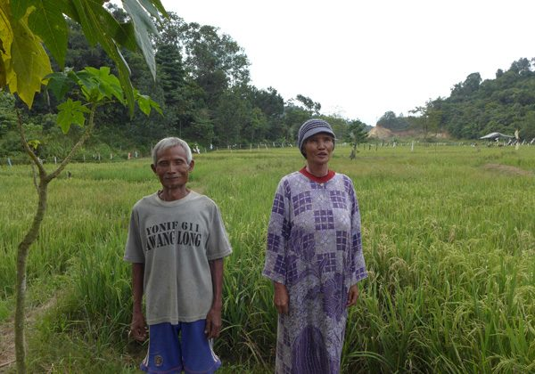 Rice and rambutan farmers Komari, 70, and his wife Nur Bety, 60, say an adjacent coal mine has disrupted water supplies, leading to water pollution and reduced yields. Loss of local forests for new coal pits has increased insect and monkey attacks on their crops at Makroman village, near Samarinda, East Kalimantan. Photo by David Fogarty (August 2014).