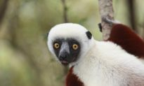 Governments Increase Funding to Conservation