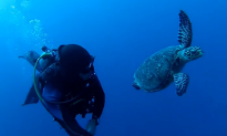 Diver Swims Side by Side With a Turtle (Video)