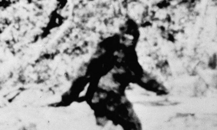 A UK man has posted video footage that purports to show the legendary beast Bigfoot, or Sasquatch, in a nature reserve in Lincolnshire, UK.  (Associated Press file photo)