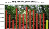Colombia Reports Drop in Deforestation