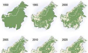 Coal, Climate and Orangutans in Indonesia