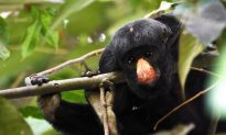 Brazil-New Rainforest Reserve Declared
