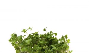 Chemical in Broccoli Sprouts May Treat Autism