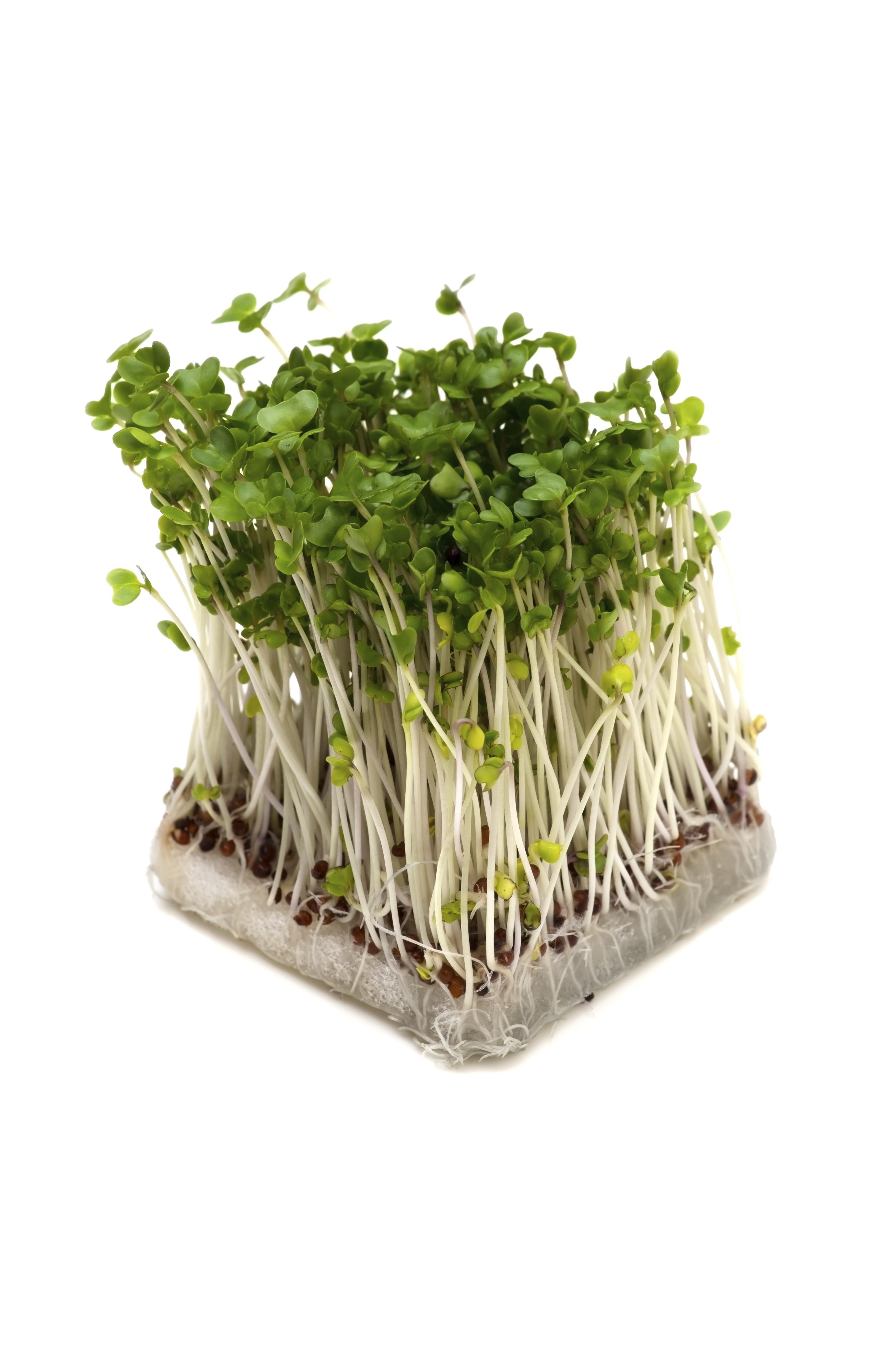 Chemical In Broccoli Sprouts May Treat >> Can A Broccoli Sprout Pill Fight Cancer