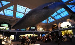 The American Museum of Natural History Celebrates Second Graduating Class of Scientists