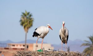 Bird Watching Paradise in Morocco