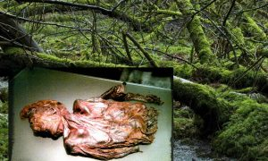 Clonycavan Man: A 2,300-Year-Old Murder Mystery