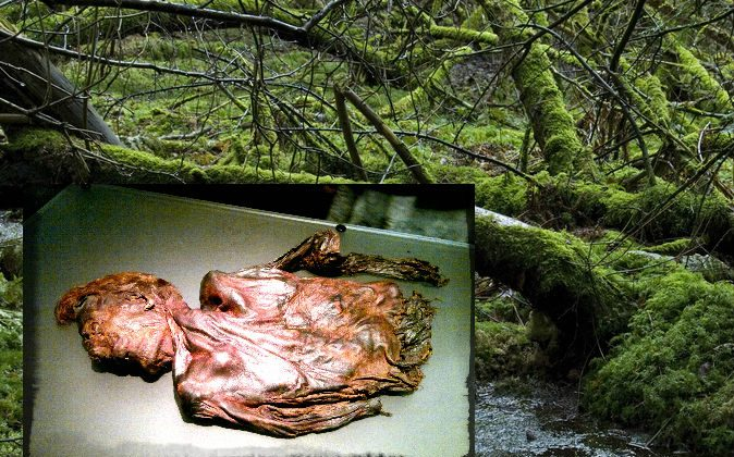 """Left: Clonycavan Man, who lived around the 4th or 3rd century B.C., now a """"bog body,"""" on display at the National Museum of Ireland in Dublin. (Mark Healey/Wikimedia Commons) Background: A file photo of a bog. (Shutterstock*)"""
