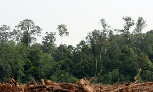 Indonesia Merges Environment and Forest